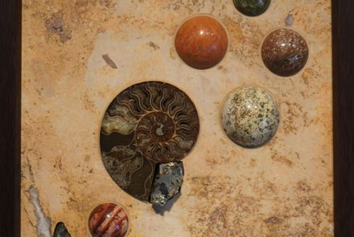 Earth Sampler Series XIII: Ammonite and Pyrite